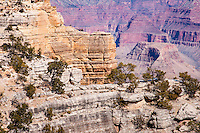 United States, Arizona, Grand Canyon. Trailview Overlook, the first lookout along the West Rim Drive.