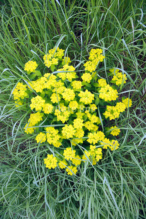 wild yellow flowers close up in grass