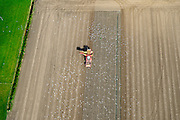 Nederland, Zeeland, Zeeuws-Vlaanderen, 19-10-2014; Nieuwland, omgeving Biervliet. Aardappeloogst<br /> Potato harvest.<br /> luchtfoto (toeslag op standard tarieven);<br /> aerial photo (additional fee required);<br /> copyright foto/photo Siebe Swart