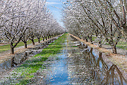 Almond Blossom Trail in Fresno California