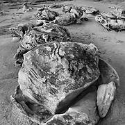 Cracked Eggs At Dusk - Bisti Badlands - New Mexico - Black & White