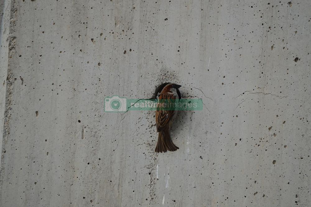 June 11, 2017 - Ankara, Turkey - A bird perches in a hole of wall in Ankara, Turkey on June 11, 2017. (Credit Image: © Altan Gocher/NurPhoto via ZUMA Press)