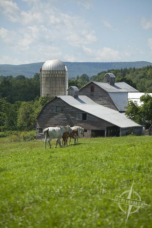 Farm on NY-10 in Schoharie County, NY.
