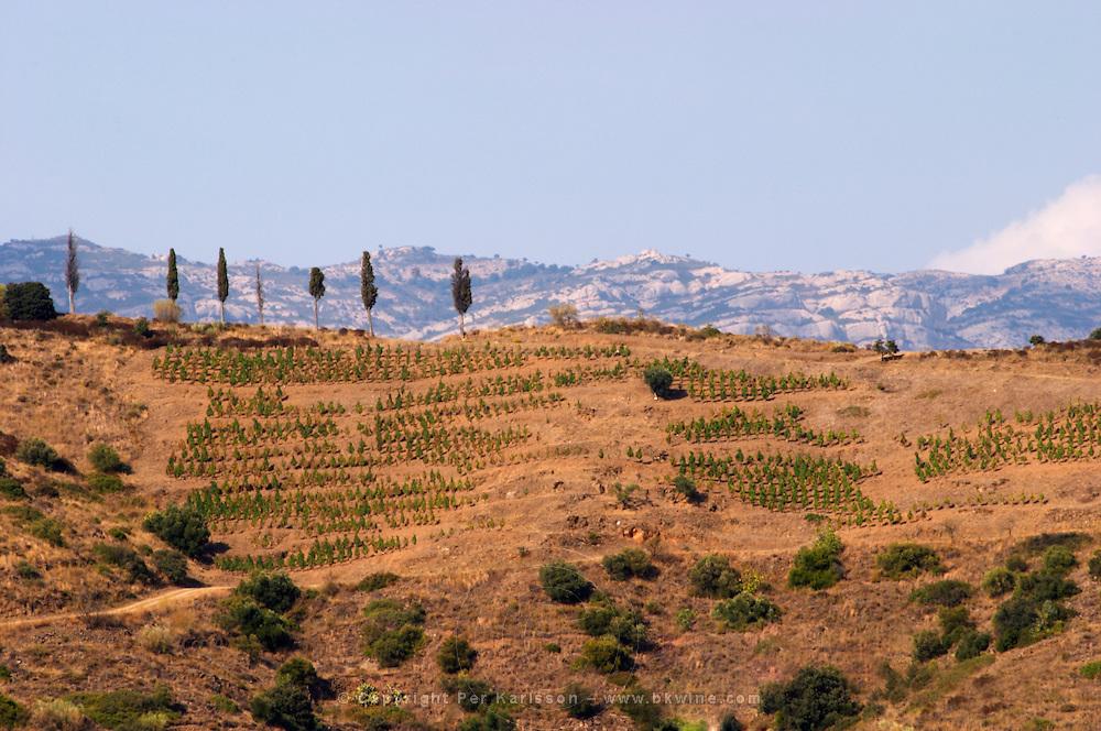 View from the winery. Clos de l'Obac, Costers del Siurana, Gratallops, Priorato, Catalonia, Spain.