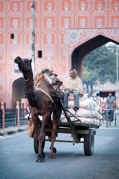 A camel pulling a cart laden with goods in Jaipur, India.