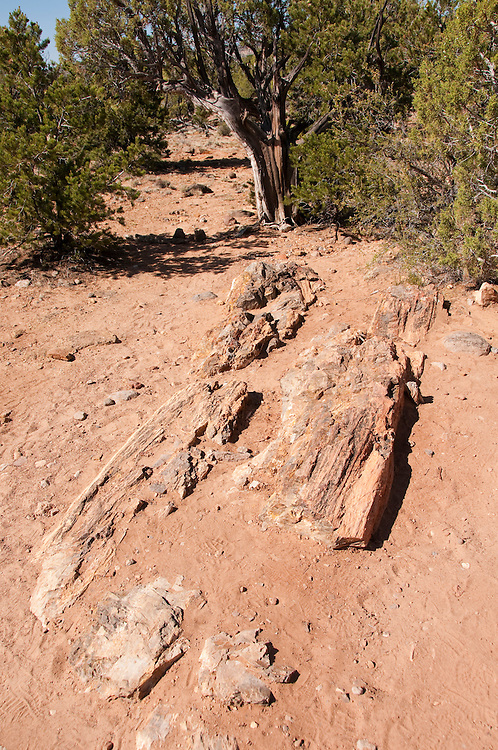 USA, Utah, hiking at Escalante at Escalante Petrified Forest State Park to enjoy the petrified wood, views of the Grand  Staircase and Colorado Plateau, and local vegetation such as pinon pine and Utah juniper. Petrified wood.
