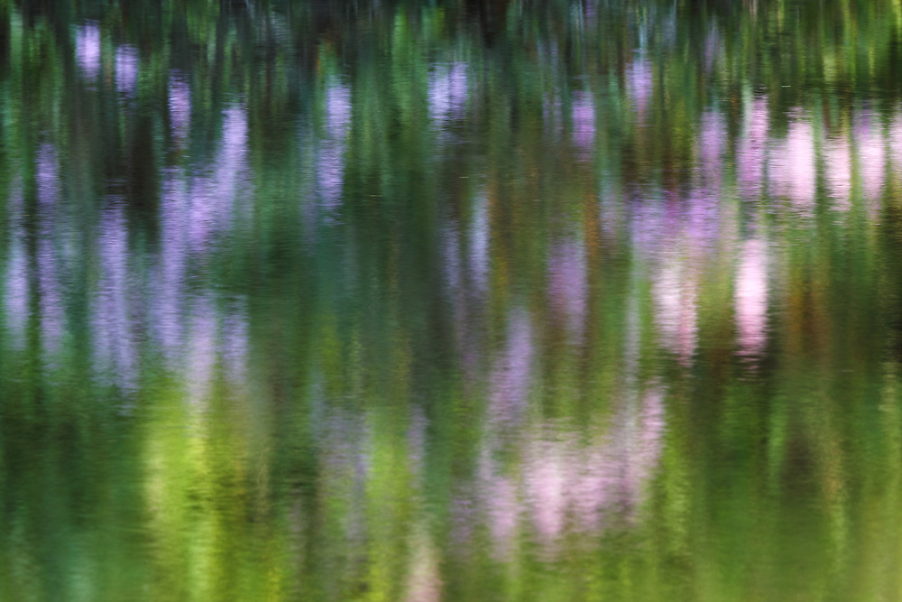 Impressionism photography of a Rhododendron reflecting in a quiet brook in Central Massachusetts. <br /> <br /> Impressionism photography are available as museum quality photo, canvas, acrylic, wood or metal prints. Wall art prints may be framed and matted to the individual liking and interior design decoration needs:<br /> <br /> https://juergen-roth.pixels.com/featured/spring-at-the-sudbury-grist-mill-juergen-roth.html<br /> <br /> Good light and happy photo making!<br /> <br /> My best,<br /> <br /> Juergen<br /> Photo Prints & Licensing: http://www.rothgalleries.com<br /> Photo Blog: http://whereintheworldisjuergen.blogspot.com<br /> Instagram: https://www.instagram.com/rothgalleries<br /> Twitter: https://twitter.com/naturefineart<br /> Facebook: https://www.facebook.com