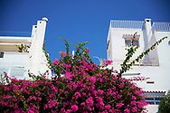 Detail view of a white building with pink flowers at Figueretes beach on August 21, 2020 in Ibiza, Spain. Almost all Schengen countries recommend not traveling to Spain due to COVID -19. The quarantine imposed by the United Kingdom has been decisive, many establishments have not opened and the average occupancy is less than 50%.