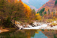 River bank in an autumn forest