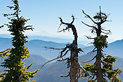 Blue ridges of the Central Cascades extend eastwards from a hike on Three Fingers Mountain in Boulder River Wilderness on Goat Flats Trail #641 from Tupso Pass trailhead to Tin Can Gap. Mount Baker Snoqualmie National Forest, Washington, USA.