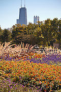 Flowers in Lincoln Park with the Chicago skyline.