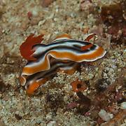 Palawan - Marine Life