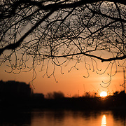 WASHINGTON DC--Sunrise over the Tidal Basin silhouettes the branches of the cherry trees before their spring bloom.