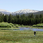 A young boy makes his way to Tuolumne River to fish while visiting Tuolumne Meadows in Yosemite National Park