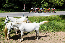 Horses during Stage 1 of 24th Tour of Slovenia 2017 / Tour de Slovenie from Koper to Kocevje (159,4 km) cycling race on June 15, 2017 in Slovenia. Photo by Vid Ponikvar / Sportida