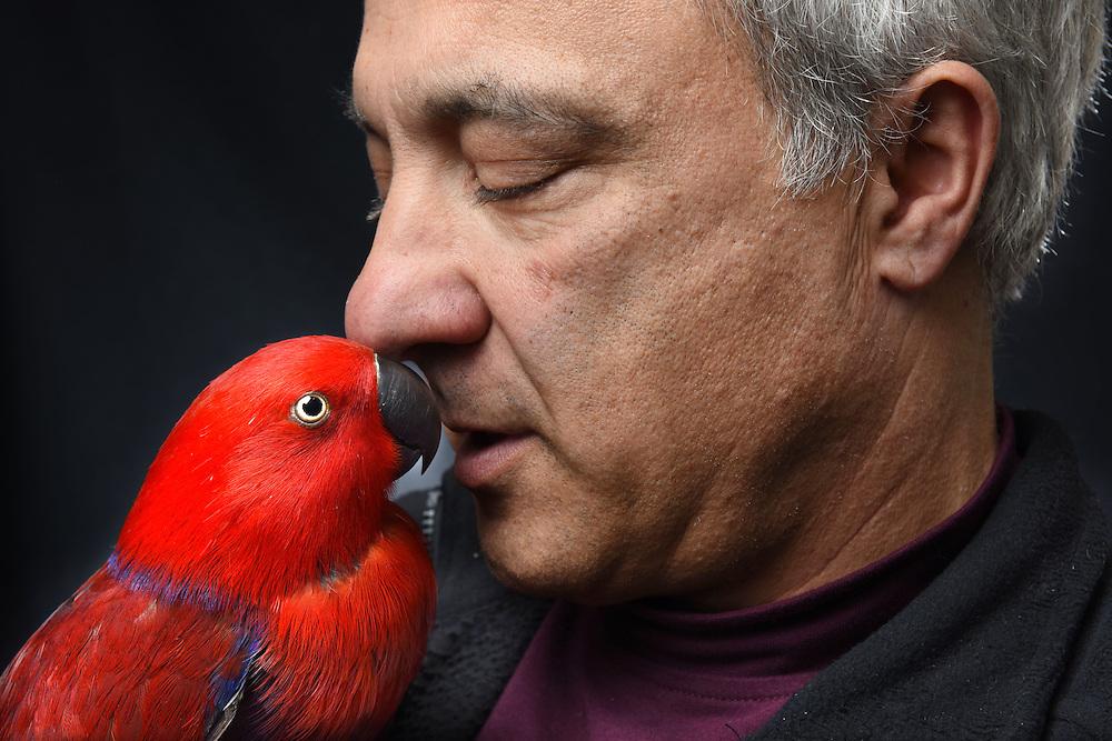 """Photo by Mara Lavitt -- Special to the Hartford Courant<br /> March 21, 2015, Middletown<br /> The eighth FeatherFest was held in Middletown by the Connecticut Parrot Society providing visitors with education about parrots and other birds. Peter Lombardo of Rocky Hill with his eclectus parrot named Ava. Lombardo says about Ava, """"She talks. She's a character. She laughs. We take her out in a cat carrier for presentations. She was at UConn last week for a college level presentation. They [parrots] are still wild, they're not domesticated."""""""