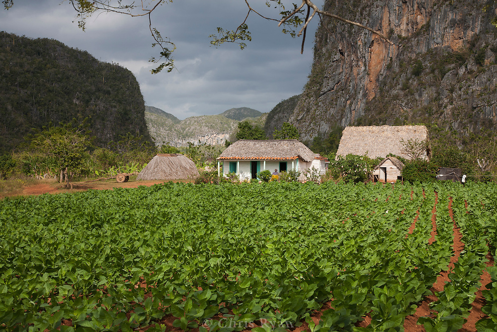 Tobacco farm and farmhouse with mogotes in background, Vinales Valley, Cuba