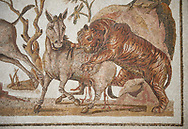 Picture of a Roman mosaics design depicting a lion attacking two onagers or Asiatic wild ass, from the ancient Roman city of Thysdrus. 3rd century AD. El Djem Archaeological Museum, El Djem, Tunisia. .<br /> <br /> If you prefer to buy from our ALAMY PHOTO LIBRARY  Collection visit : https://www.alamy.com/portfolio/paul-williams-funkystock/roman-mosaic.html  . Type -   El Djem   - into the LOWER SEARCH WITHIN GALLERY box. Refine search by adding background colour, place, museum etc<br /> <br /> Visit our ROMAN MOSAIC PHOTO COLLECTIONS for more photos to download  as wall art prints https://funkystock.photoshelter.com/gallery-collection/Roman-Mosaics-Art-Pictures-Images/C0000LcfNel7FpLI