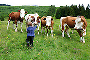 A boy in a green field with free grazing cows Photographed in Austria