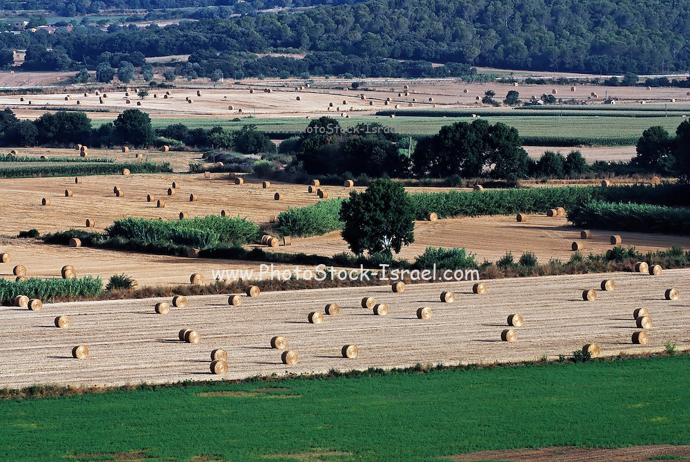 Spain, Catalonia, agricultural fields