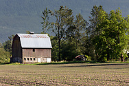 The Maynard Barn on Old Orchard Road in Chilliwack, British Columbia, Canada.  The Maynard Barn was built in 1924 at the same time the orchard was planted.  When the Fraser River would flood, the family farming the property would use a rope and a boat to get between the barn and house as they were slightly elevated from the rest of the property. Unfortunately the Maynard Barn burned down as a result of an arson fire in 2019. Here, in 2017, the field was planted with corn.
