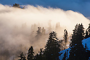 Trees shrouded in low clouds illuminated at sunrise, North Cascades National Park, Washington.