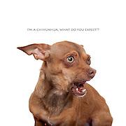 Sacramento city shelter dogs on Thursday, February 9, 2012..