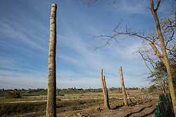 Stumps of trees partially felled in connection with the HS2 high-speed rail link are viewed from within Poors Piece Protection Camp on 26th April 2021 in Steeple Claydon, United Kingdom. Poors Piece Protection Camp is one of several protest camps set up by environmental activists in opposition to the HS2 infrastructure project along its Phase 1 route between London and Birmingham.
