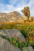 Round Top, Rock and Paintbrush, Mokelumne Wilderness, Eldorado National Forest, Alpine County, California