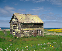 Old barn and spring wildflowers along the Pacific Coast of Mendocino County California