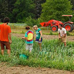 Farmhands work a field at the Crimson and Clover Farm in Northampton, Massachusetts.