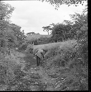 Scene of a tragedy at Coolmahan, Tullogher, Co. Kilkenny, where James Murphy and Bridget Conway died..25.07.1960