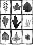Oote Boe promo card nature leaf