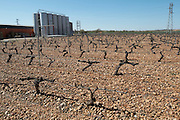 cabernet sauvignon vines outside fermentation and storage tanks bodegas frutos villar , cigales spain castile and leon
