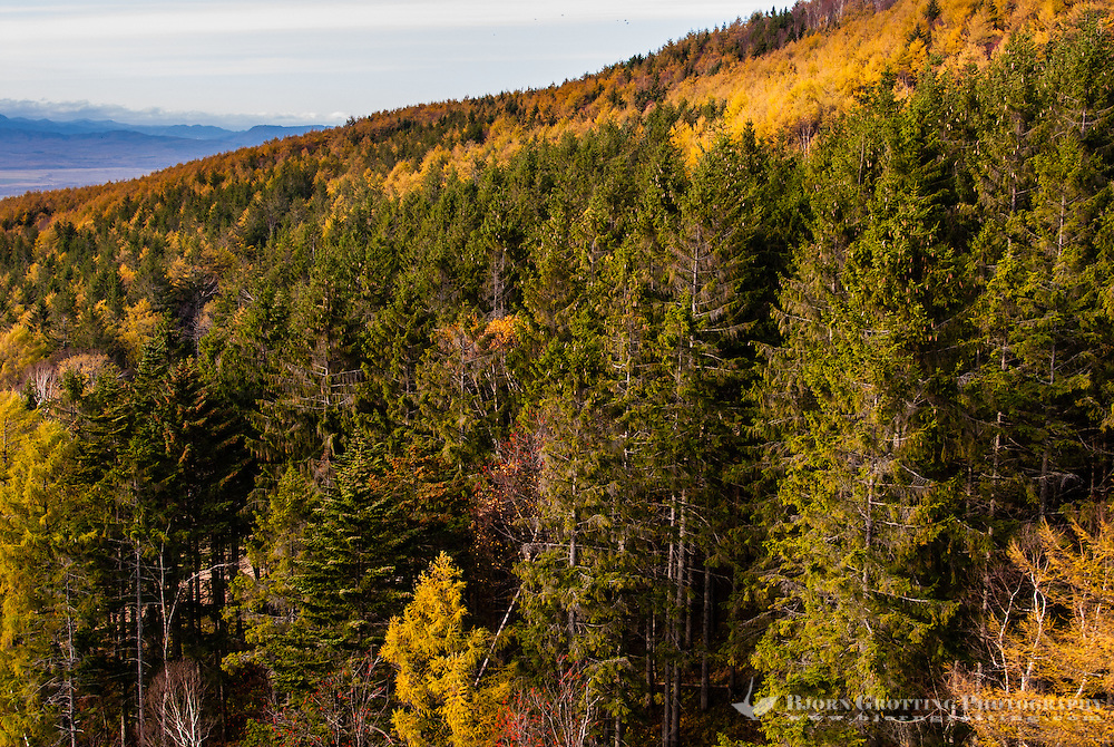 Russia, Sakhalin, Yuzhno-Sakhalinsk. Autumn forest at Gorny Vozdukh Ski center.
