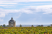 Vineyard. The tower. Chateau Latour, Pauillac, Medoc, Bordeaux, France