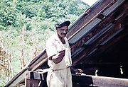 Cocoa farm worker holding dead rat caught in drying shed, rural Trinidad, c 1962