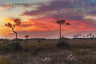 Sunset clouds over sawgrass wetlands in Everglades National Park, Florida, USA