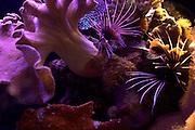 Israel, Eilat, underwater observatory