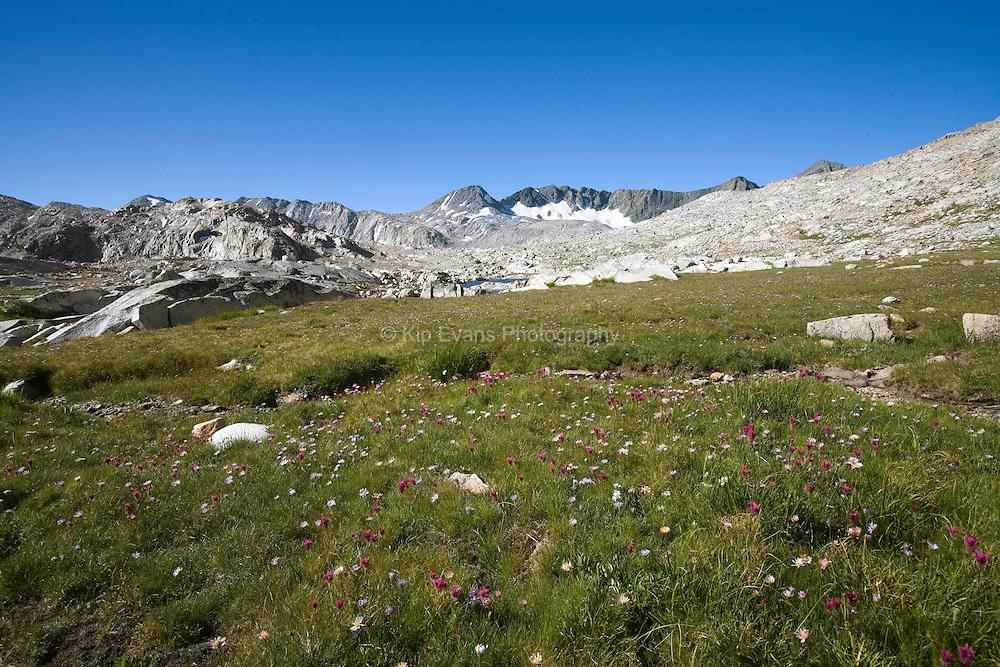 Alpin Meadow in Upper Evolution Basin