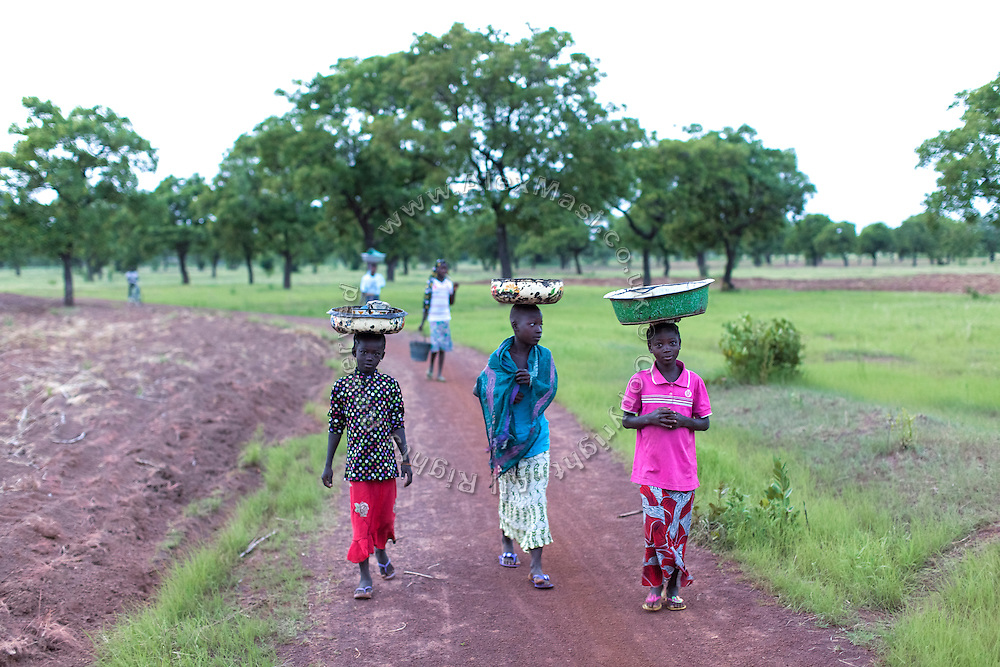 Hassana Ibrahim, 11, (right) her classmate Rahima Ibrahim, 11, (left, not sisters) and an older girl are walking towards a field where they will collect a load of Shea nuts to help supporting their families, near Boggu village, Tamale, northern Ghana.