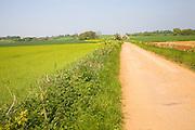 Sandy road through fields, Alderton, Suffolk, England