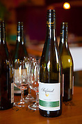 Petite Fleur at Siefried Winery, Nelson, South Island, New Zealand