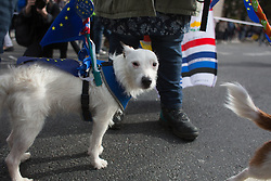 October 7, 2018 - London, England - Wooferendum dog march: Dogs against Brexit march to Westminster in London (Credit Image: © Louise Wateridge/ZUMA Wire)