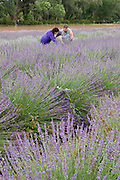 Vertical of two women picking lavender<br />