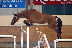 440-Udine<br /> KWPN Paardendagen Ermelo 2004<br /> Photo © Hippo Foto