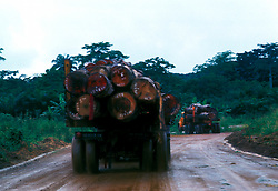 Stock photo of logs being transported from the work site by the truck load