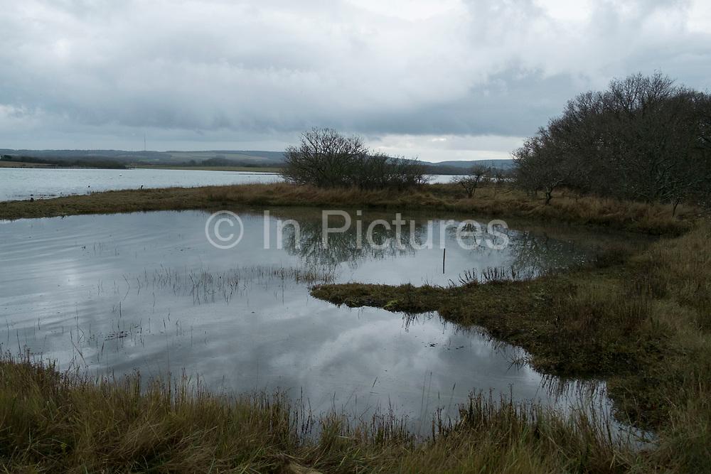 Cold morning marsh landscape on the Isle of Wight, England, United Kingdom.