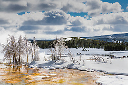 A winter day at Bisquit Basin in Yellowstone National Park. Thermophiles are glowing yellow and orange, bison are trying to survive along the Firehole River.  Yellowstone is amazing in winter.