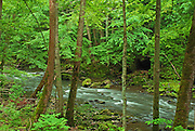 Clifton Gorge Nature Preserve, Rushing Stream